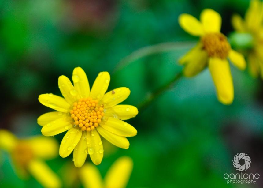 April 14, 2012_flowers