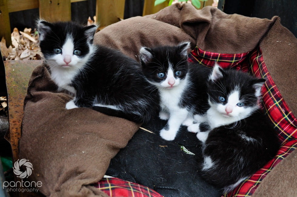 April 15, 2012_kittens