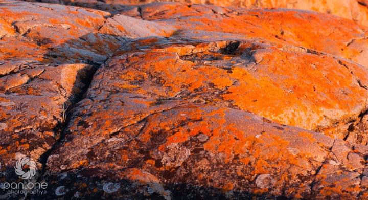 Weekly Photo Challenge –Orange