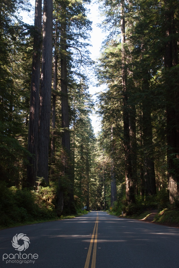 July 27, 2014 Redwood