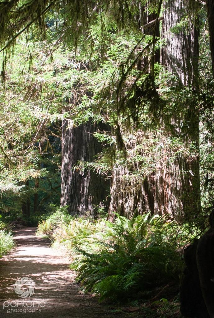 July 27, 2014 Redwoods