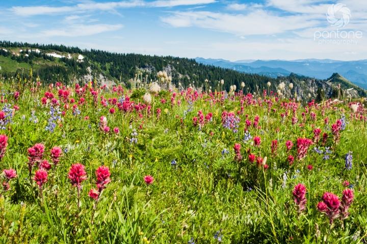 July 30, 2014 Mt. Rainier
