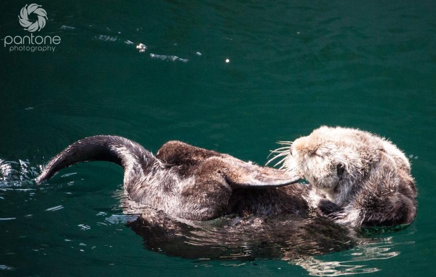 August 01, 2014 Seattle Aquarium