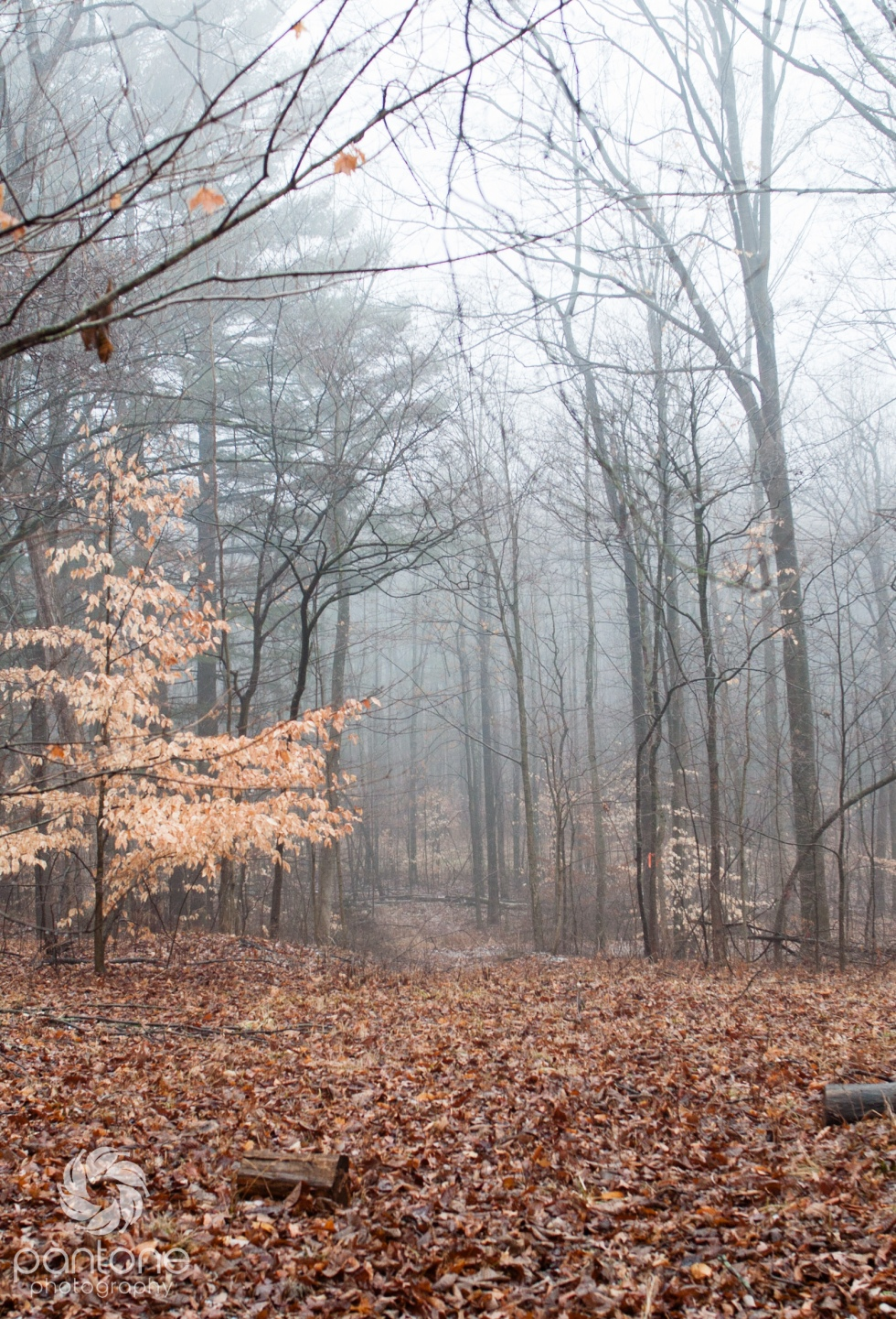 February 01, 2015 Forest in the fog