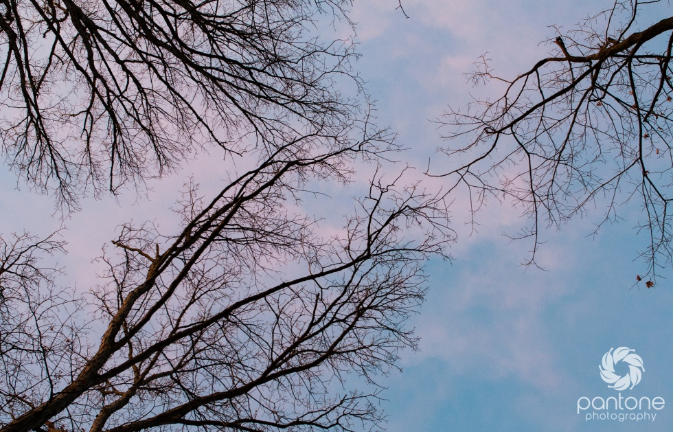 March 16, 2015 winter trees