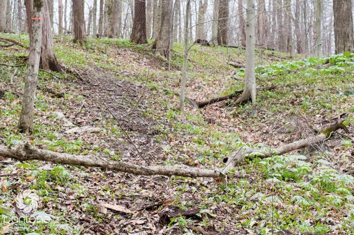 April 16, 2015-Trails