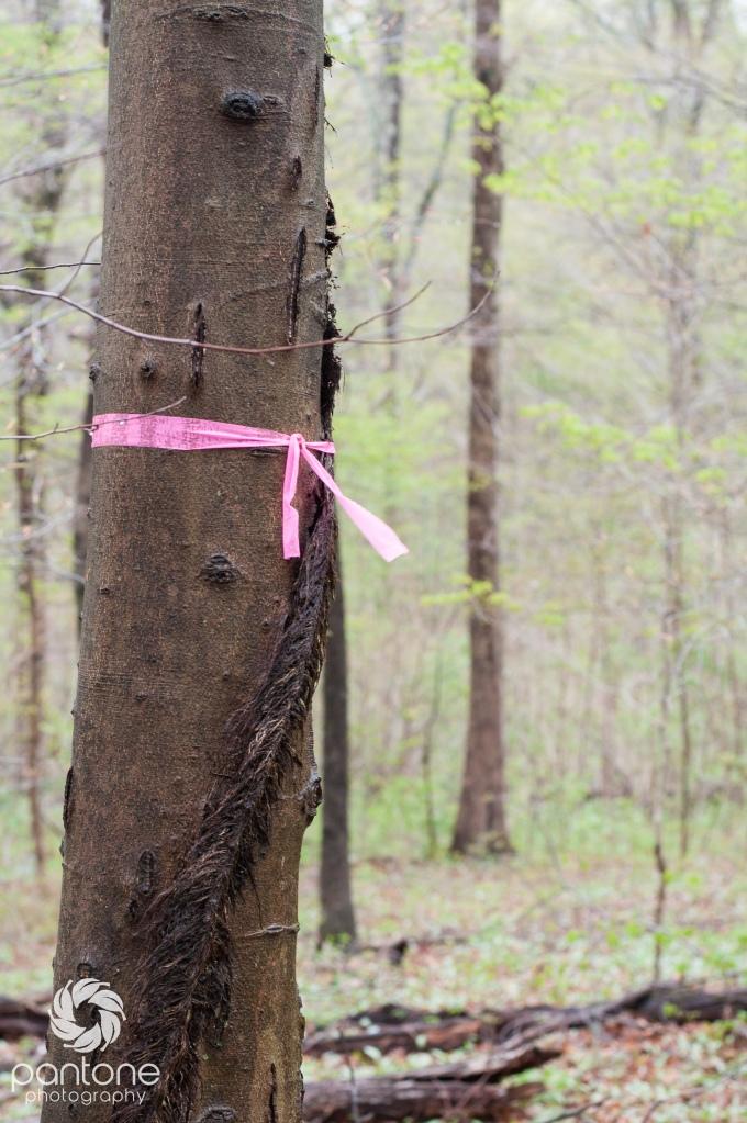 April 25, 2015-Trails