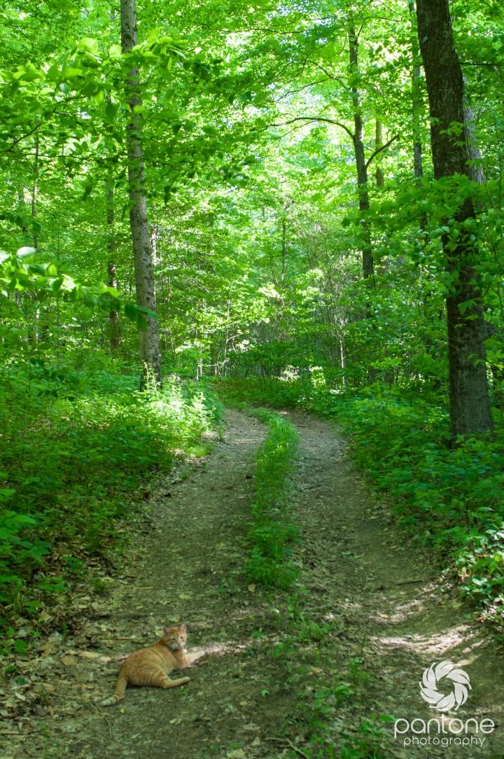 Sustainable Sundays – Trailmaintenance