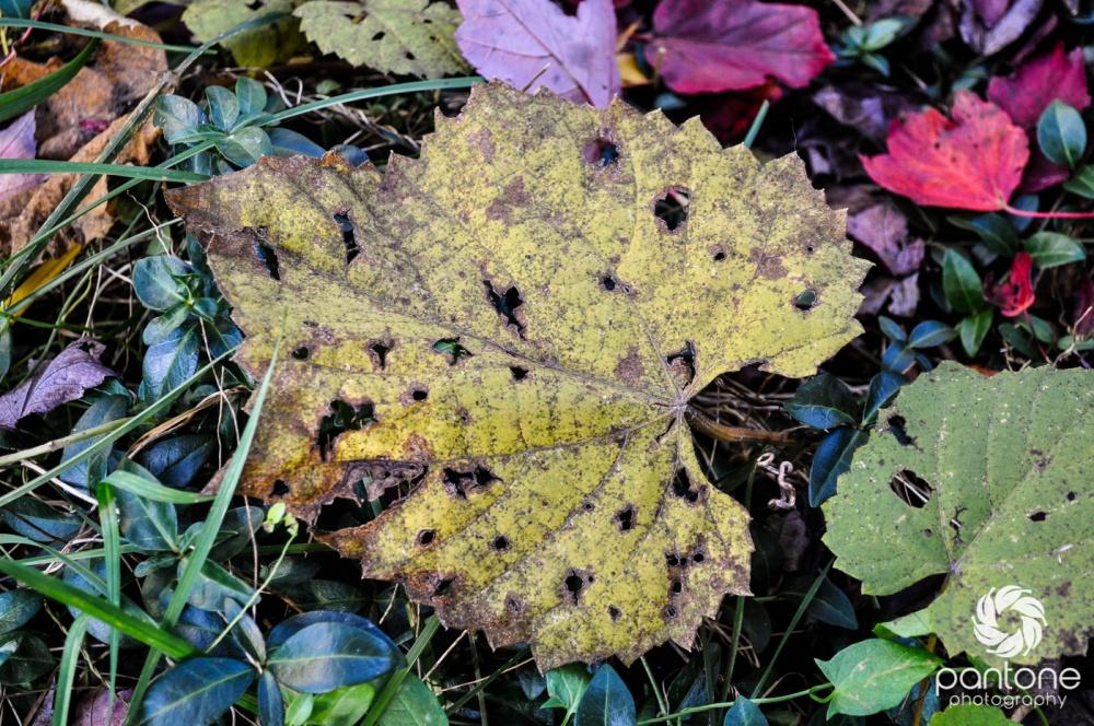 October 28, 2011 Fallen leaves