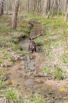 Josie in the creek