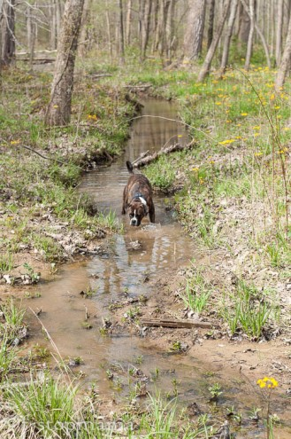 Josie in the creek