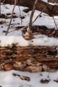 Fungi in snow