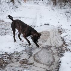 Josie in the snow