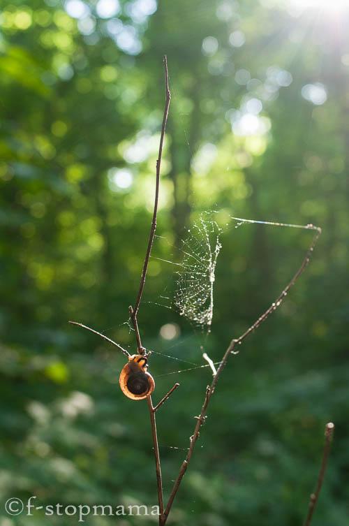 Snail & spider web