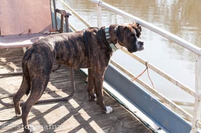 Josie's boat ride