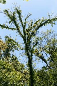 Spring Trees