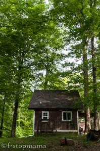 Cabin in the spring