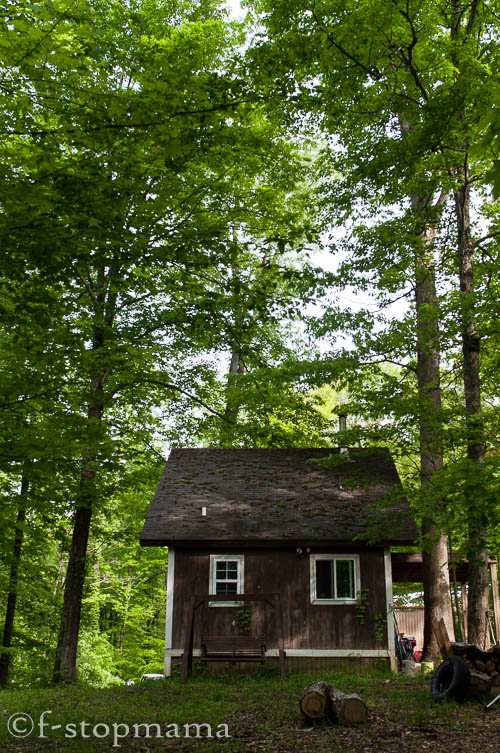 Cabin in the spring