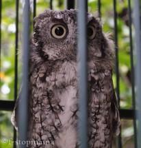 travel-thursday-ohio-bird-sanctuary-1346
