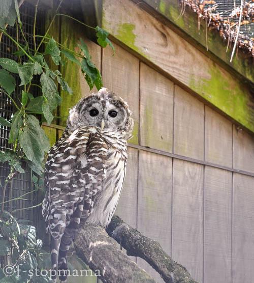 travel-thursday-ohio-bird-sanctuary-1361