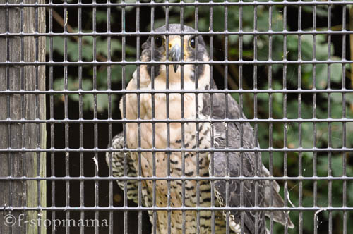 travel-thursday-ohio-bird-sanctuary-1362