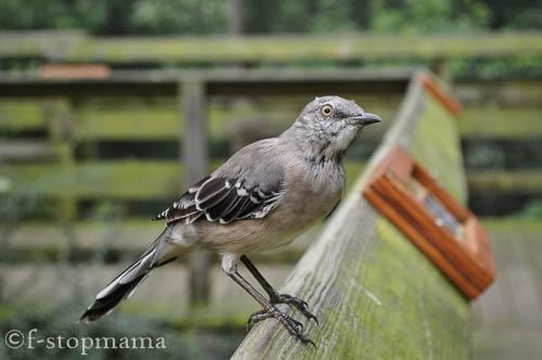 Travel Thursday – Ohio BirdSanctuary