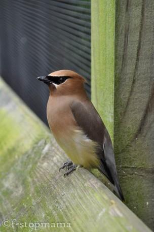 travel-thursday-ohio-bird-sanctuary-1377