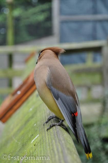 travel-thursday-ohio-bird-sanctuary-1391