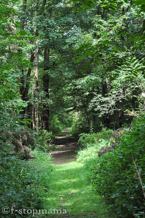 travel-thursday-ohio-bird-sanctuary-1415