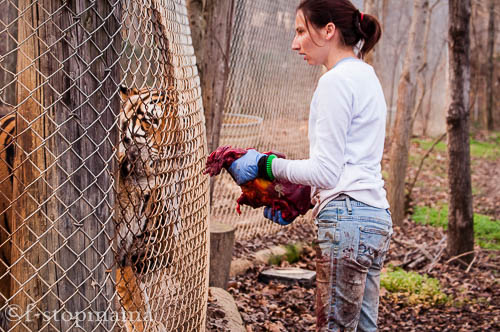 Exotic Feline Rescue Center