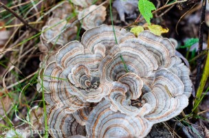 Fall mushrooms