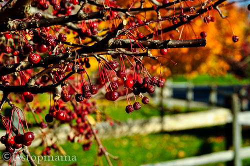 Travel Thursday – Washington Township Park Avon,IN