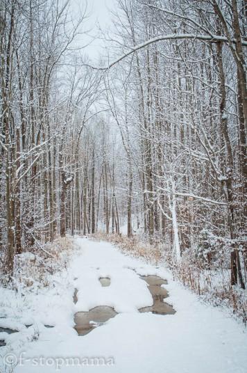 changing-seasons-december-023
