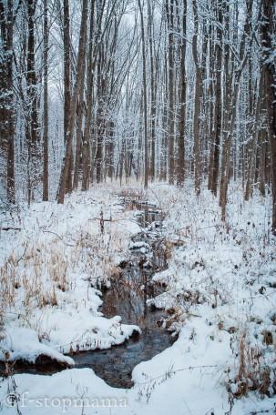 changing-seasons-december-027