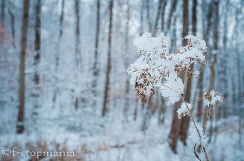 changing-seasons-december-031