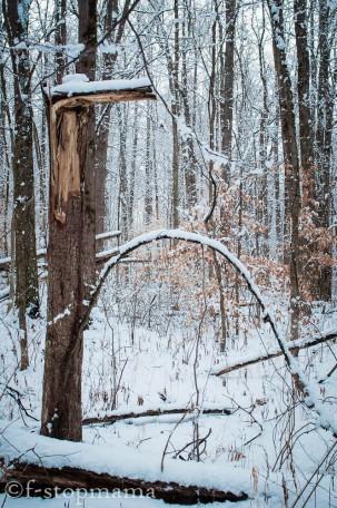 changing-seasons-december-034