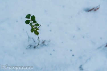 changing-seasons-december-043