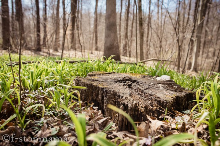 Spring and wood