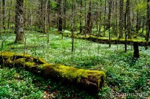 Moss covered log