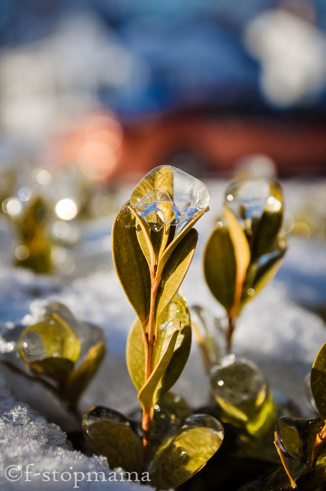 ice covered plants