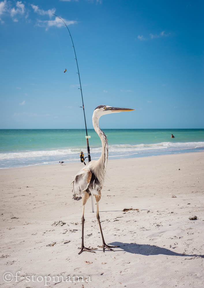 Florida bird on the beach