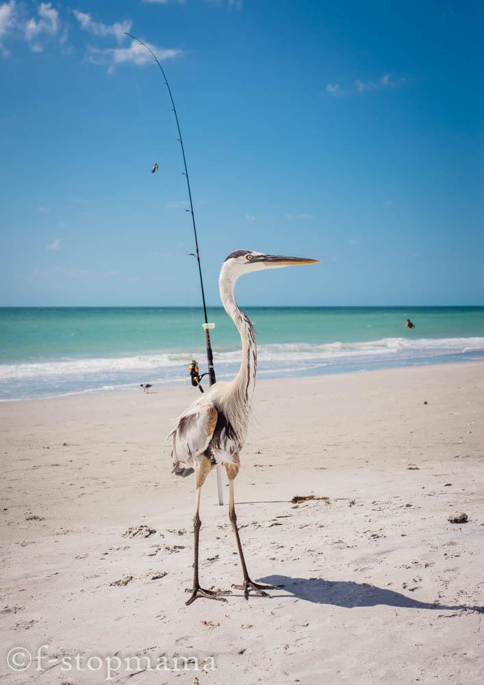 Florida bird on the beach