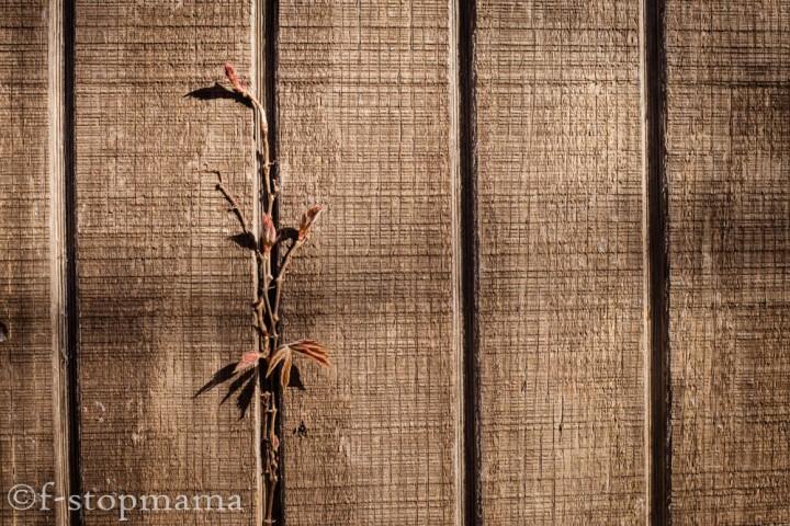 Weekly Photo Challenge –Lines