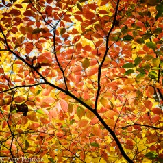 Fall forest-1