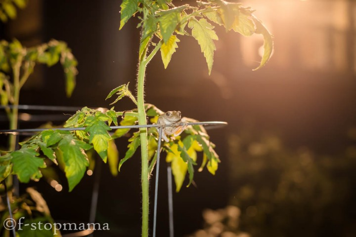 Night Frog After aRainstorm