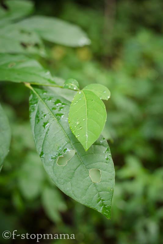 Raindrops-4