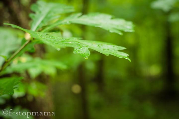 Raindrops-5