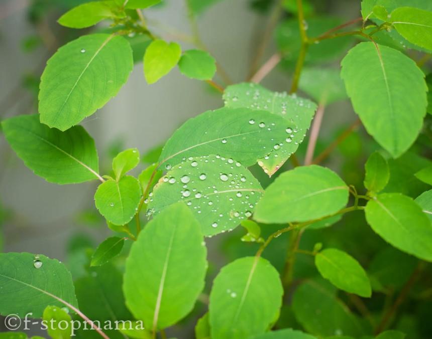 Raindrops-8