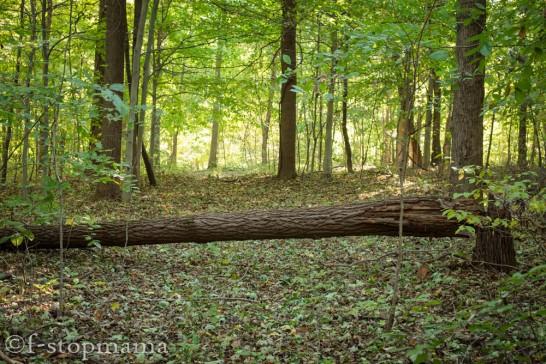 Fallen Logs-2