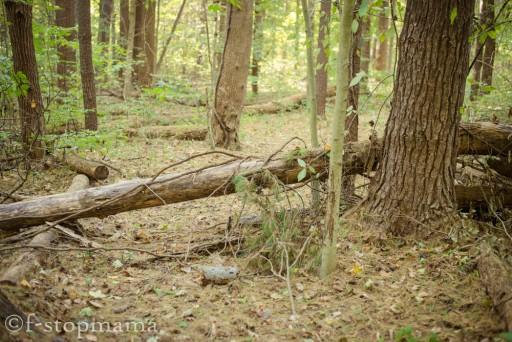 Fallen Logs-3
